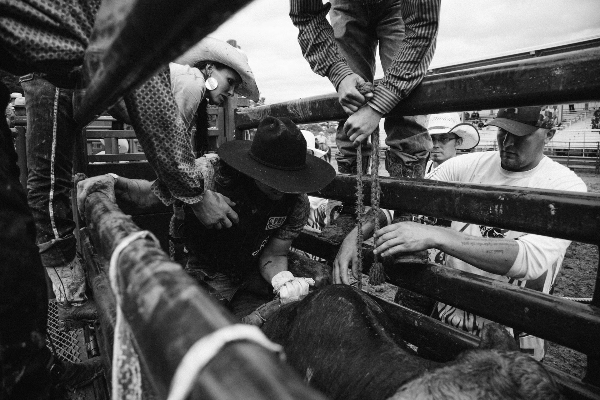 bull-rider-gets-strapped-on-bull-in-chute-black-cowboy-hat-black-river-falls-wi-rice-bull-riding-a4816