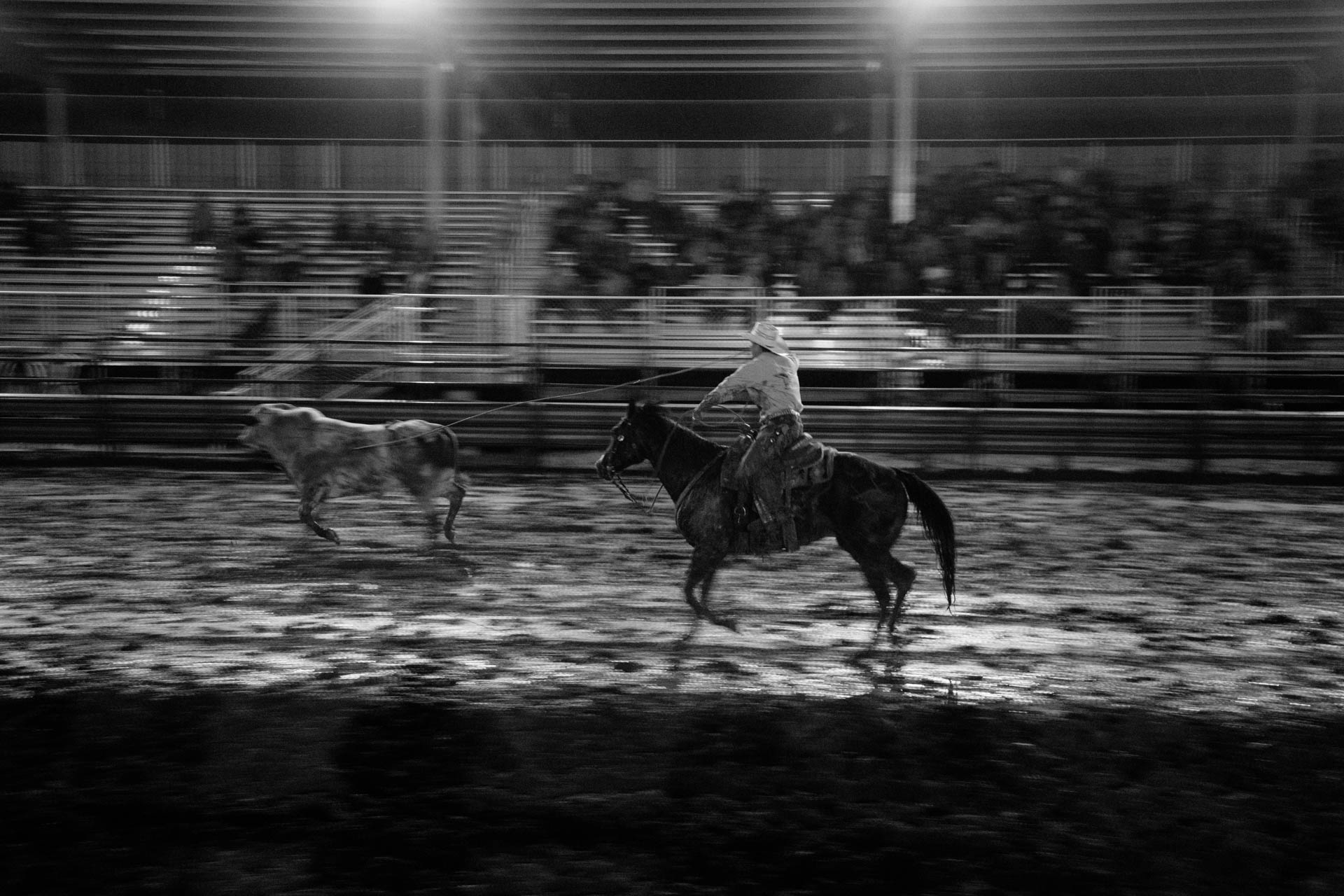 cowboy-lassos-running-bull-in-muddy-arena-rice-bull-riding-black-river-falls-wi-a5400