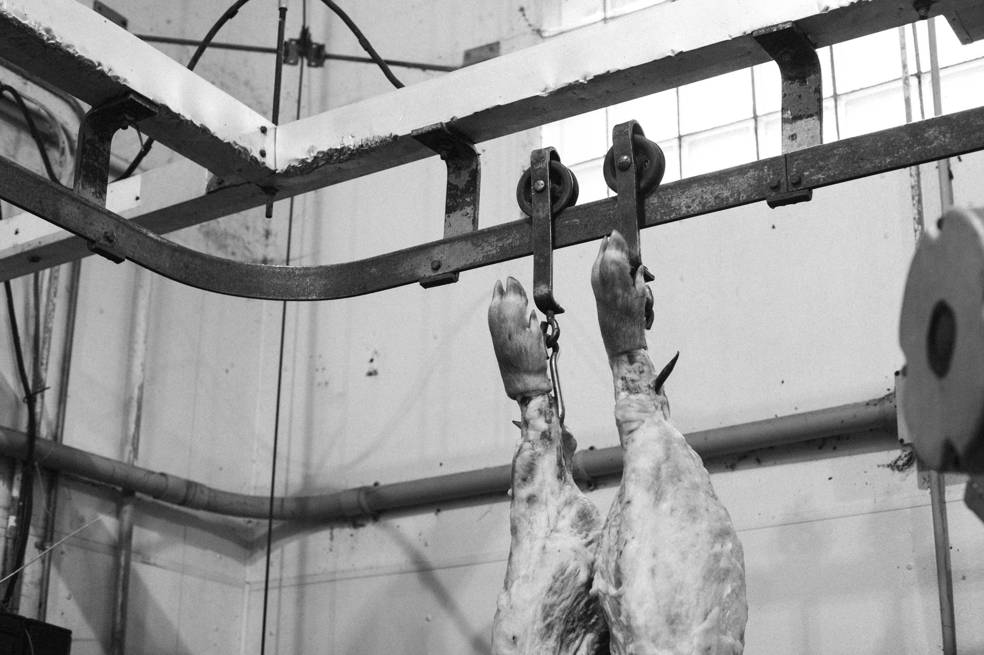 hog-hanging-in-butcher-shop-0435