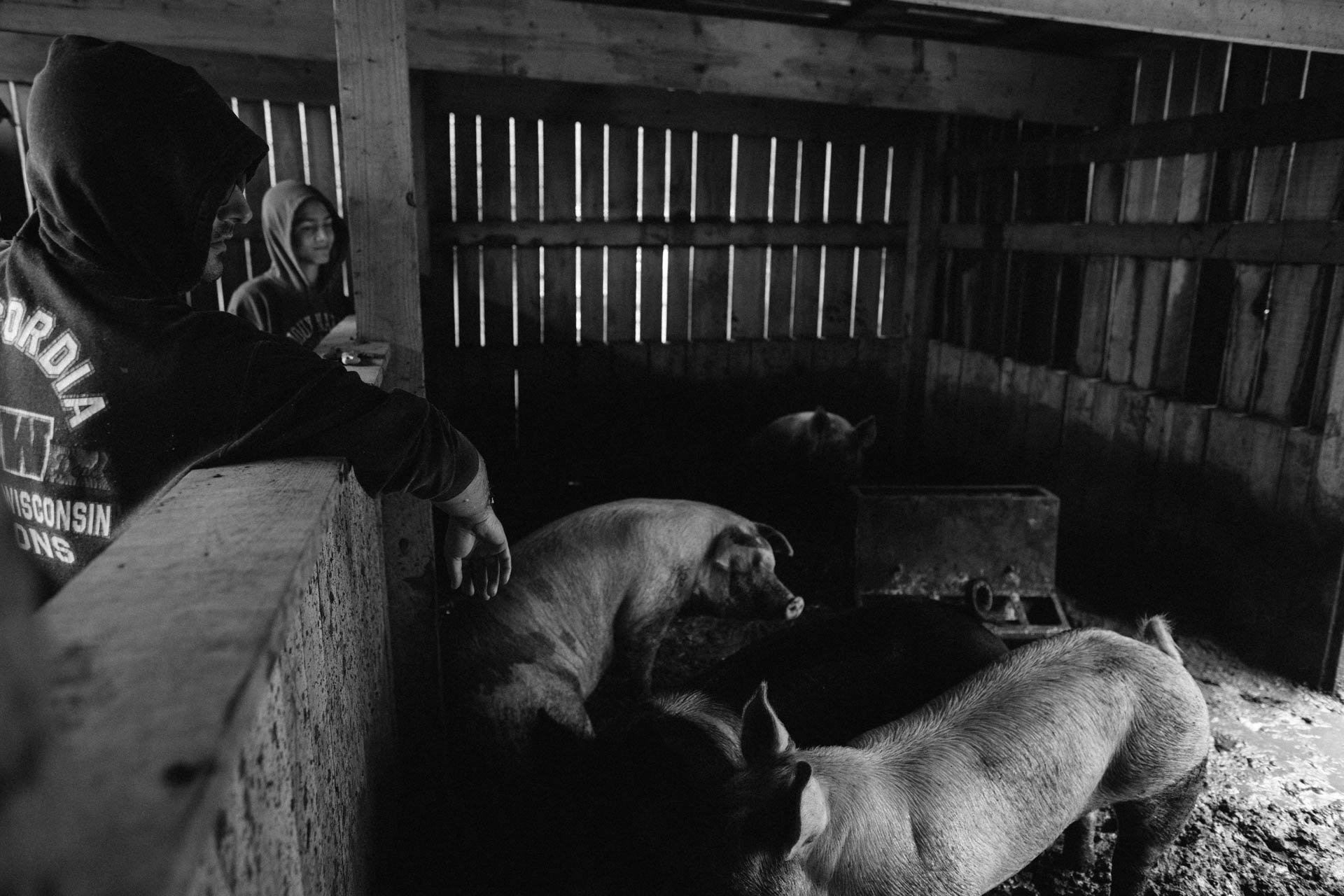 inside-hog-barn-7610