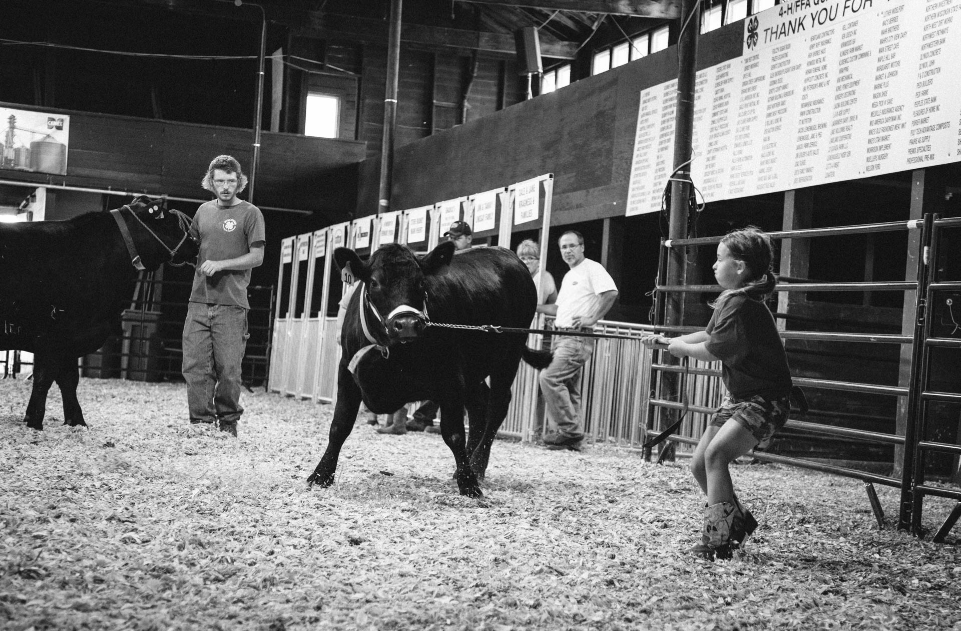 northern-wisconsin-state-fair-little-girl-gets-pulled-by-steer-in-ring