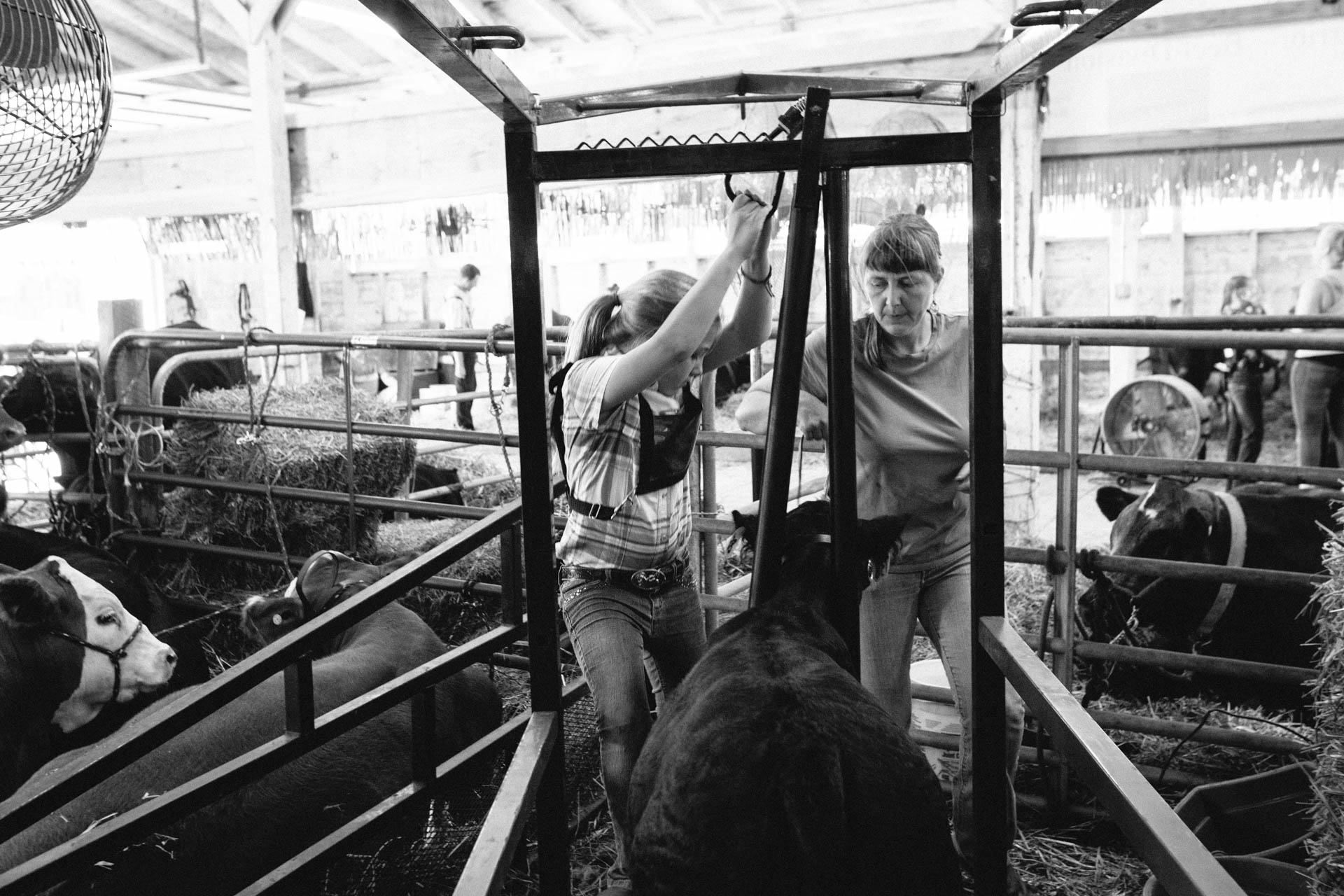 northern-wisconsin-state-fair-mom-helps-daughter-get-cattle-ready-for-show