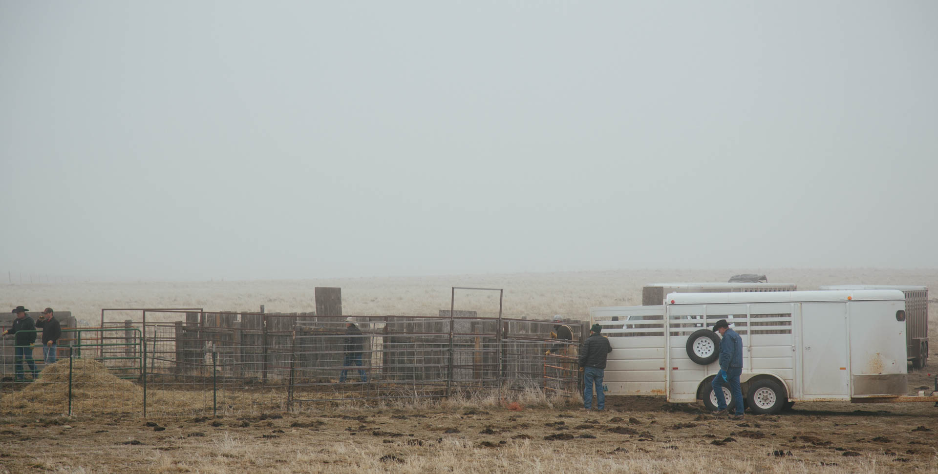 ranchers-rounding-up-cattle-sale-6737