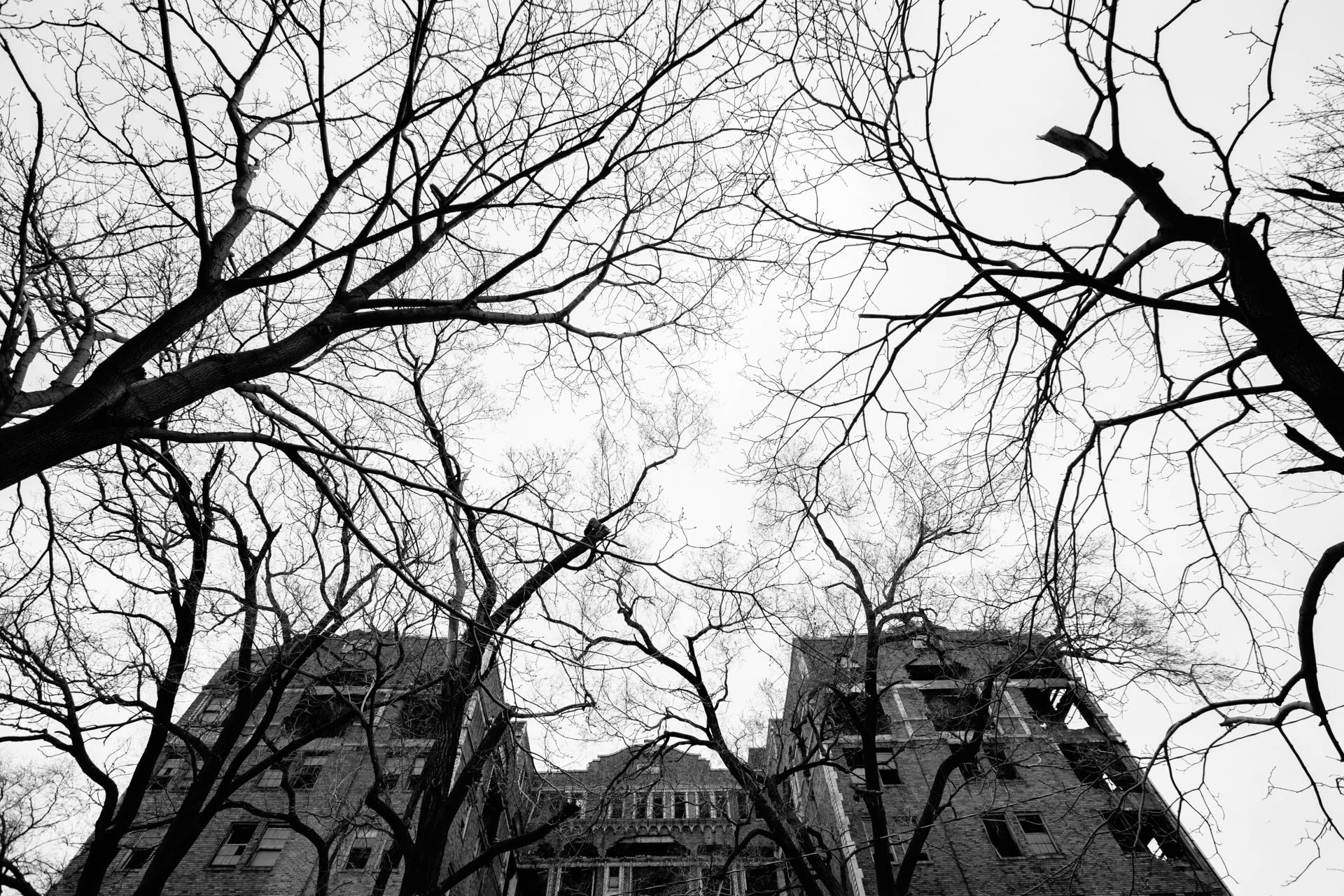 vacant-eerie-apartment-building-surrounded-by-dead-trees-gary